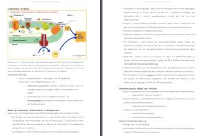 BioAbi Lernskript: Fotosynthese