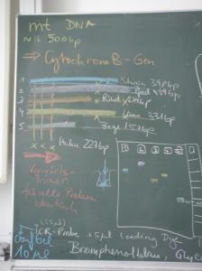 Multiplex PCR zum Nachweis von Schweinefleisch....