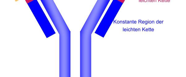 Antikörper erkennen feindliche Antigene.